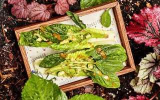 Ресторанные блюда из овощей