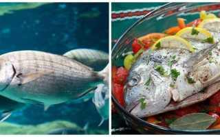 Блюда из экзотических видов рыб